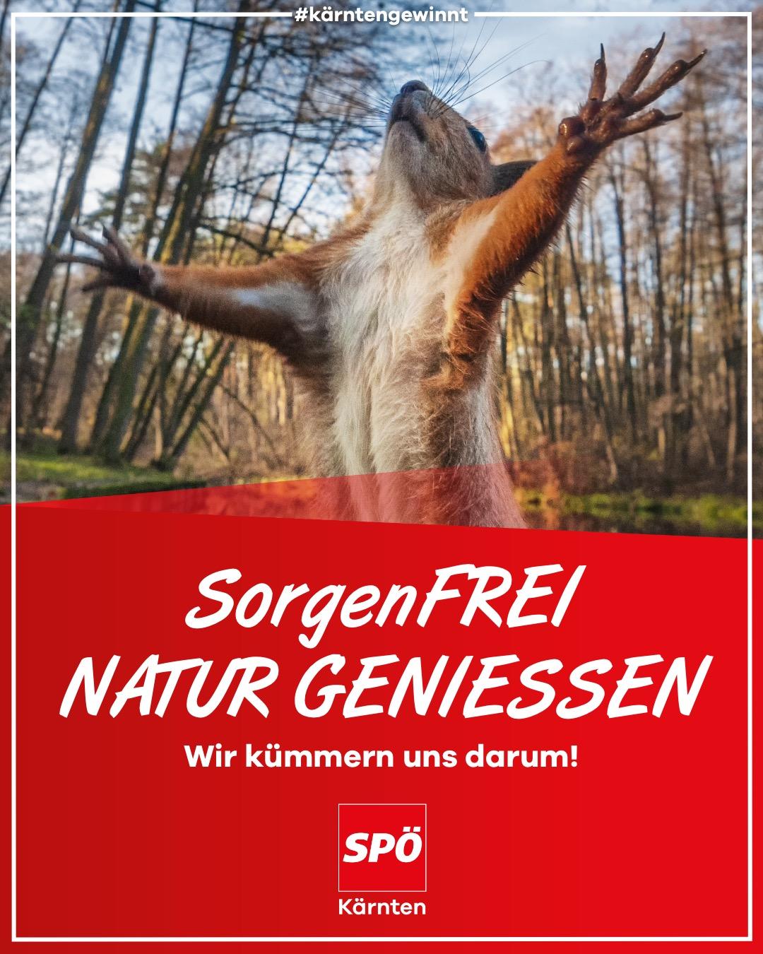 Sorgenfrei Natur geniessen Eichhörnchen
